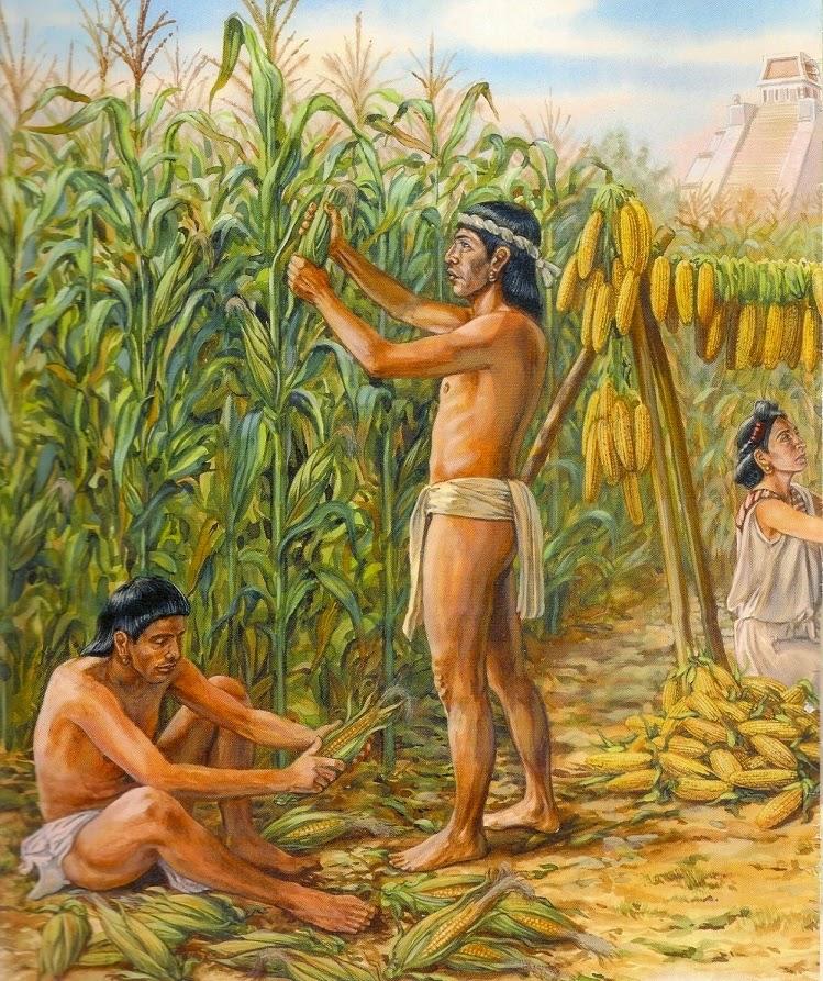 arawacos y mas